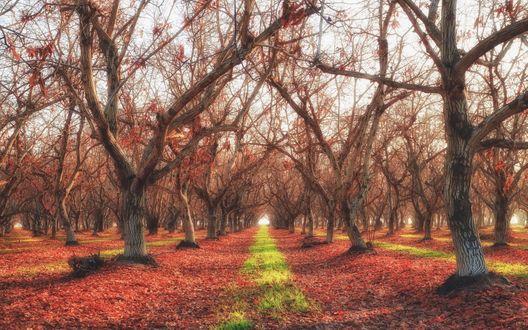 Обои Голые деревья в парке поздней осенью