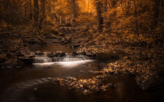 Обои Небольшой ручей в осеннем лесу