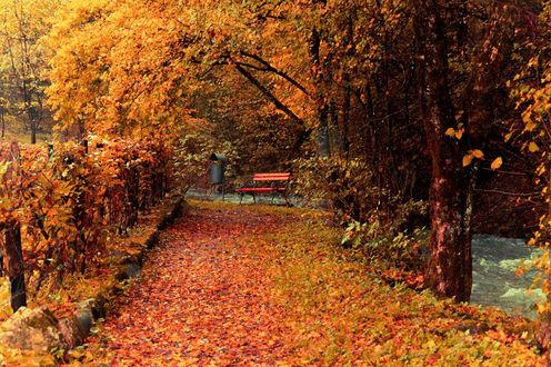 Обои Дорожка в осеннем парке, усыпанная опавшими листьями, вдали скамейка с урной