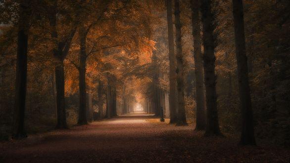 Обои Дорога в осенней листве вдоль деревьев, фотограф Saskia Dingemans