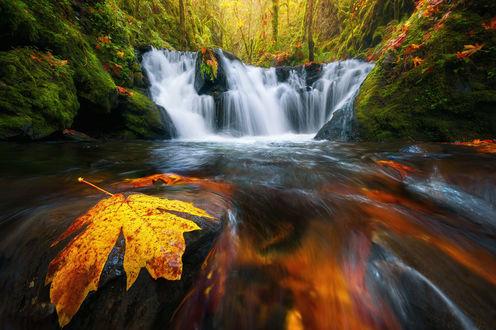 Обои Изумрудный водопад в лесу, на переднем плане кленовый листок, фотограф Steve Schwindt