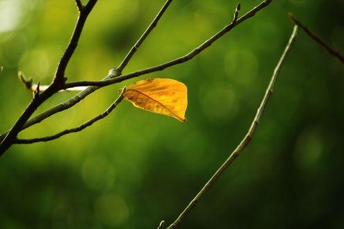 Обои Осенний листок на ветке