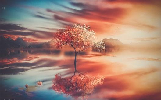 Обои Осеннее дерево на фоне облаков и его отражение в воде, by mmmprod-Mehdi Mostefai