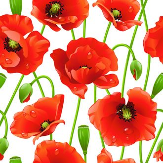 Обои Векторный рисунок красных маков в каплях росы