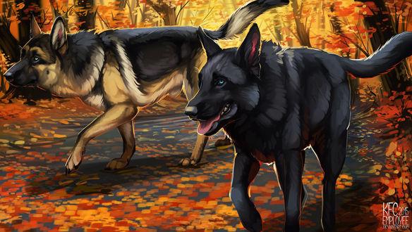Обои Две собаки гуляющие по дороге с листьями, by KFCemployee