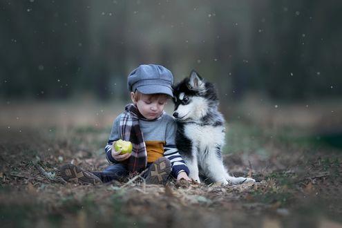 Обои Мальчик с яблоком в руке и щенок Хаски сидят на сухих осенних листьях под первым снегом, фотограф Elena Kanaschenko / Елена Канашенко