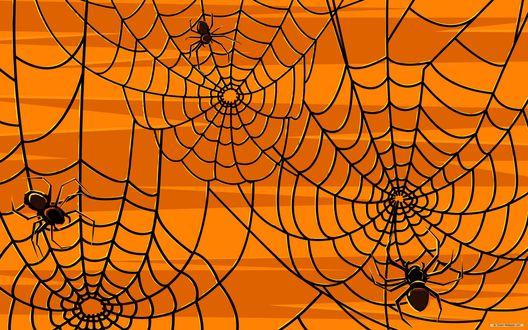 Обои Черная паутина и пауки на желтом фоне