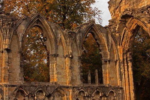 Обои Развалины готической церкви среди осенних желтых деревьев, автор DMCA