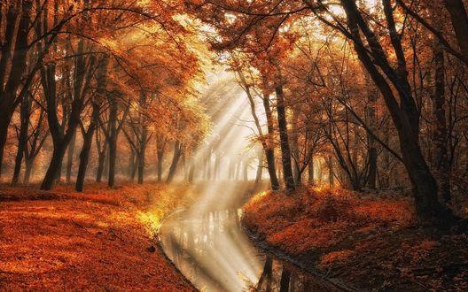 Обои Лучи солнца проникают в осенний лес, автор Lars van de Goor