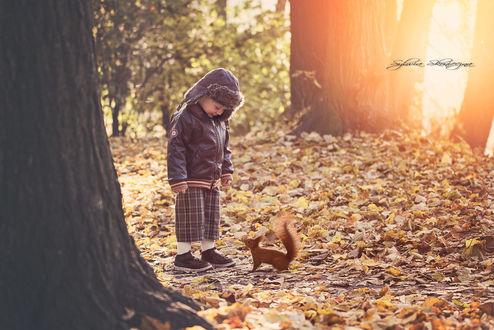 Обои Мальчик стоит перед белочкой на осенней листве, фотограф Sylwia Skonieczna