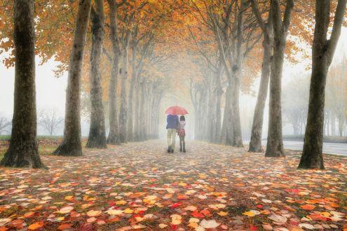 Обои Парень с девушкой под зонтом в туманном осеннем парке