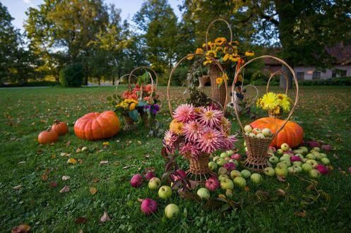 Обои Осенний натюрморт с корзинами цветов и рассыпаными яблоками и тыквами на фоне деревьев