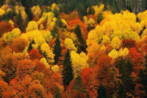 Обои Яркий осенний лес
