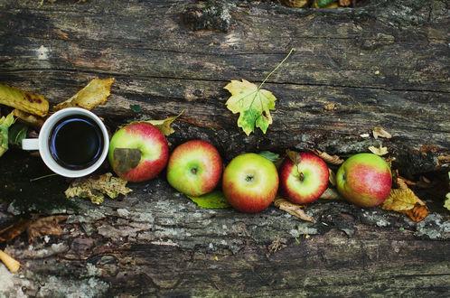 Обои Спелые яблоки и кружка кофе в расщелине дерева среди осенних листьев, by ilmari