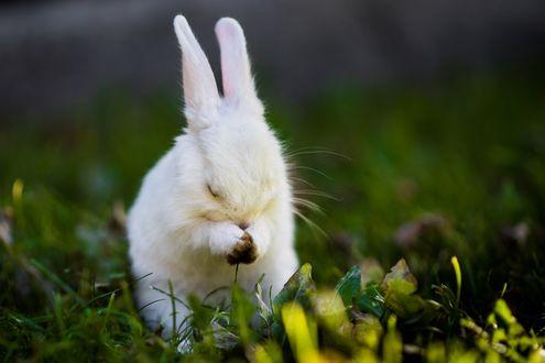 Обои Белый кролик в траве, фотограф Mustafa Kasapoglu