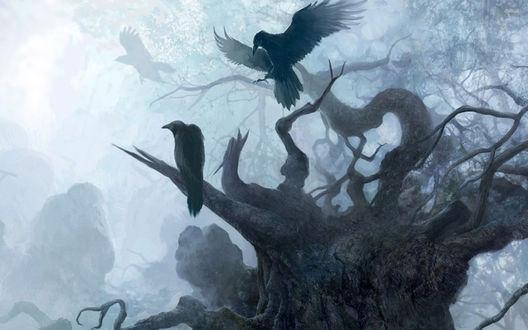 Обои Черные вороны на ветках сухого дерева в тумане, из игры Ведьмак / Witcher