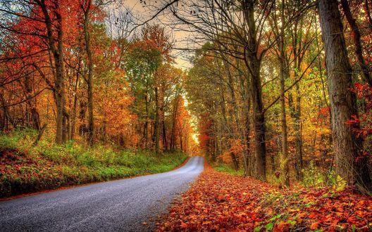 Обои Дорога через осенний лес