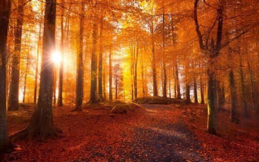 Обои Солнце освещает дорожку в осеннем парке