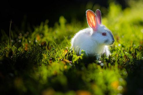 Обои Кролик сидит в траве