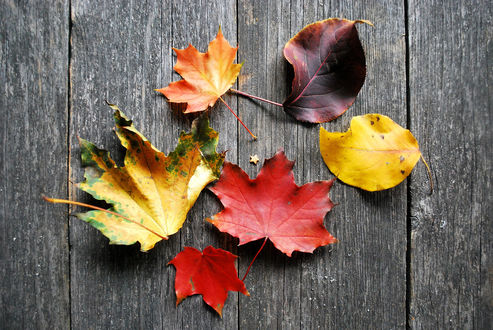 Обои Опавшие осенние листья лежат на деревянной поверхности