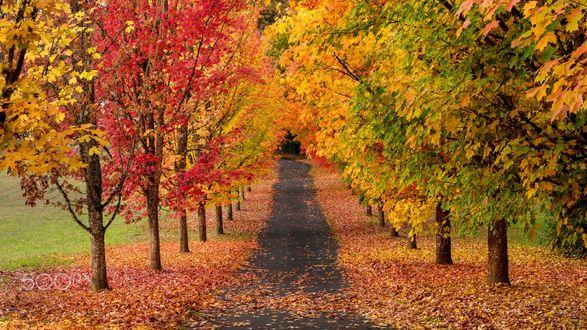 Обои Асфальтовая дорожка в осеннем парке усыпанная опавшими листьями