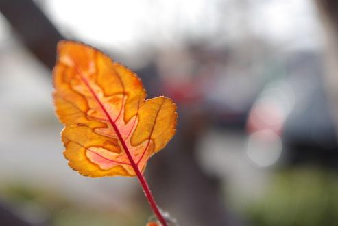Обои Осенний листок на размытом фоне