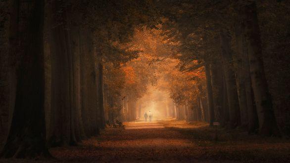 Обои Люди прогуливаются по аллее среди осенних деревьев, фотограф Saskia Dingemans