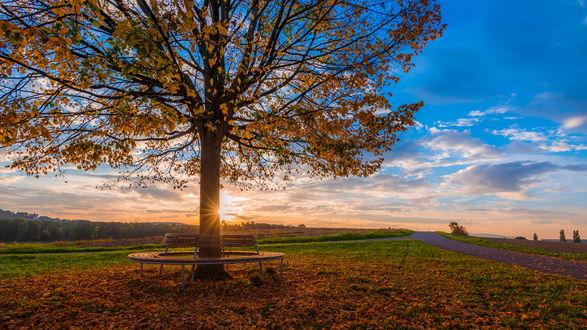 Обои Лавочка вокруг осеннего дерева на фоне заката, фотограф Kannappan tovakumar