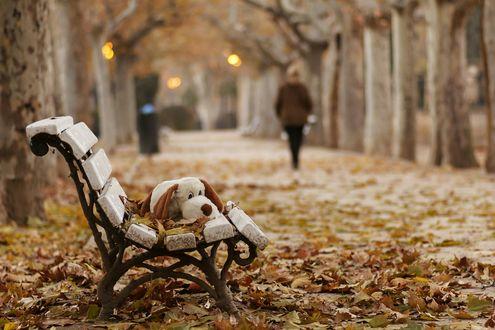 Обои Плюшевый пес и листья на скамейке на осенней аллее