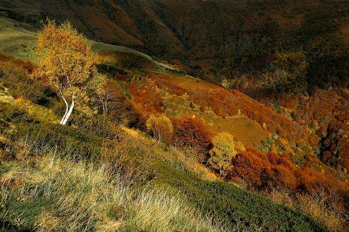 Обои Холмы с осенними деревьями