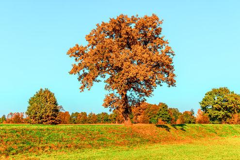 Обои Осенние деревья на фоне голубого неба
