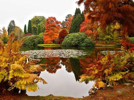 Обои Красивый осенний парк с прудом