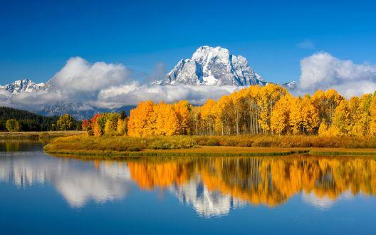 Обои Осенние деревья на берегу озера, на фоне горы Моран и голубого неба, Oxbow Bend / Оксбоун Бенд, Grand Teton National Park / Национальный парк Гранд Тетон, Вайоминг, фотограф Charlie Lansche