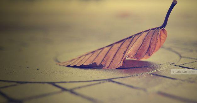 Обои Осенний лист на дороге