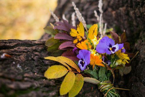 Обои Букет из осенних листьев и анютиных глазок на стволе дерева