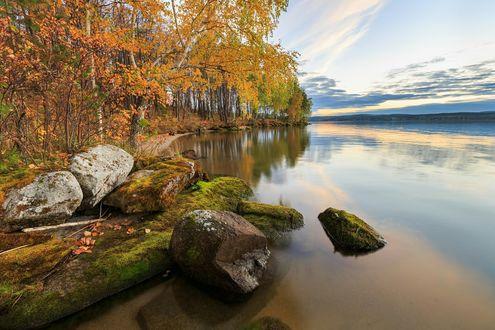Обои Осенние березы и камни на берегу водоема