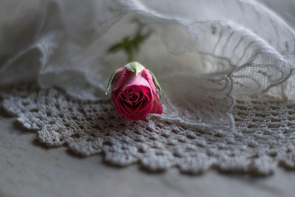 Обои для рабочего стола Розовая роза на кружевной салфетке, фотограф Julie Jablonski