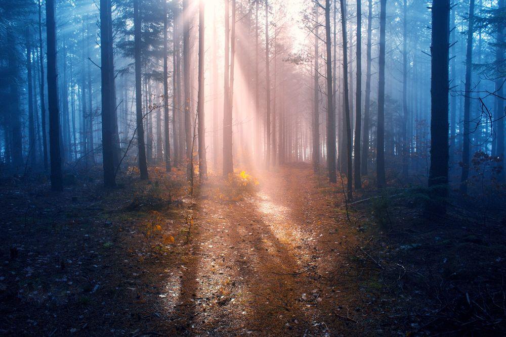 Обои для рабочего стола Солнечный свет освещает лес, фотограф Adnan Bubalo