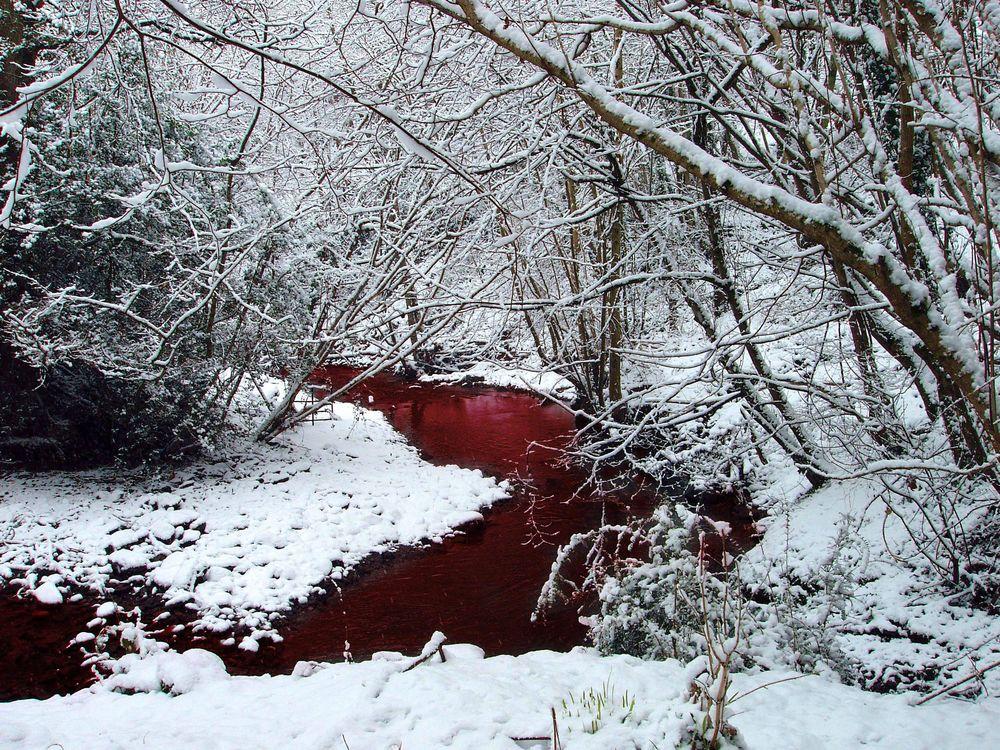 Обои для рабочего стола Кровавая речка в лесу зимой среди деревьев в снегу