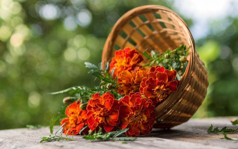 Днем, картинки осенние цветы на рабочий стол хорошее качество
