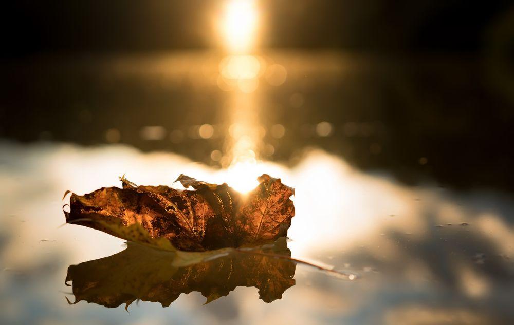 Обои для рабочего стола Кленовый пожелтевший листок в солнечных бликах лежит в луже, by Conrad Neumann