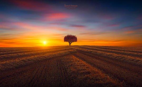 Обои Закат над осенним полем с деревом на горизонте, фотограф hmetosche