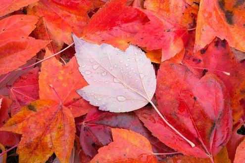 Обои Осенние листья после дождя