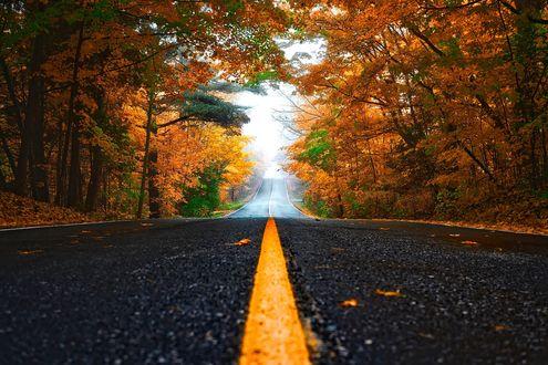Обои Дорога и осенний лес