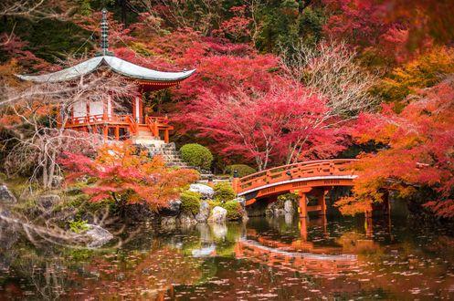 Обои Пагода Daygo-ji и красный мосток у пруда в осеннем парке, Kyoto / Киото, Japan / Япония