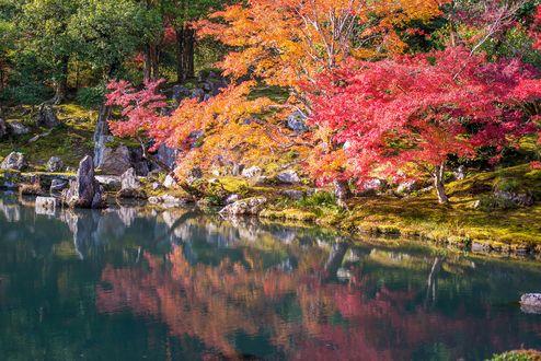 Обои Пруд с камнями в осеннем парке в солнечный день, Киото / Kyoto, Япония / Japan
