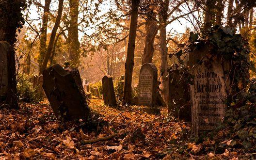 Обои Заброшенное кладбище в осеннем лесу