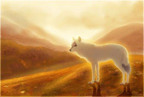 Обои Белый волк стоит на холме на фоне гор и неба, by Kerwana
