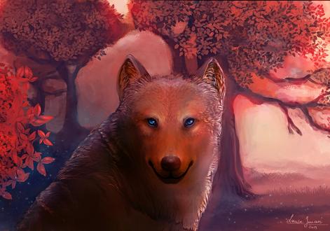 Обои Голубоглазый волк на фоне деревьев, by Astrokiwi