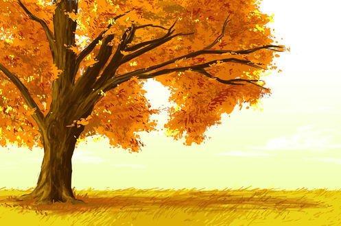 Обои Одинокое дерево с золотой листвой на фоне неба и зеленой травы, by Akpaley
